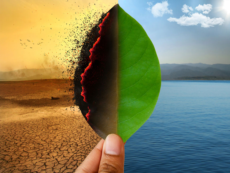 Live:  Story - Climate change